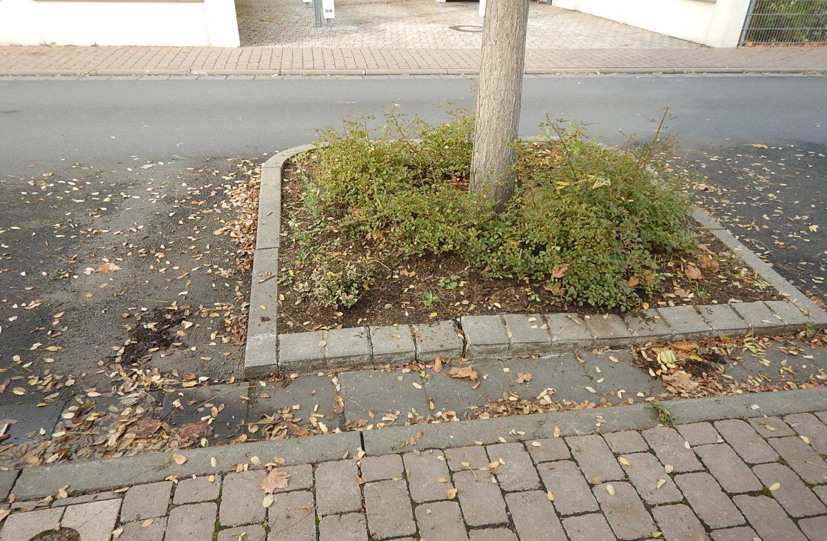 Bäume in der Sylter Straße haben den Asphalt angehoben.