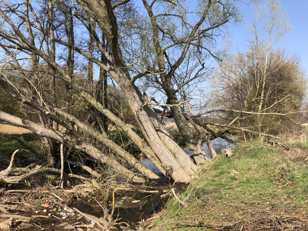 Eine Weidegruppe ist entlang des Weges zwischen Münsterer Schützenhaus und Hergershausen umgestürzt. Bis zur Beseitigung muss der Weg aus Sicherheitsgründen gesperrt bleiben. Foto: Wasserverband