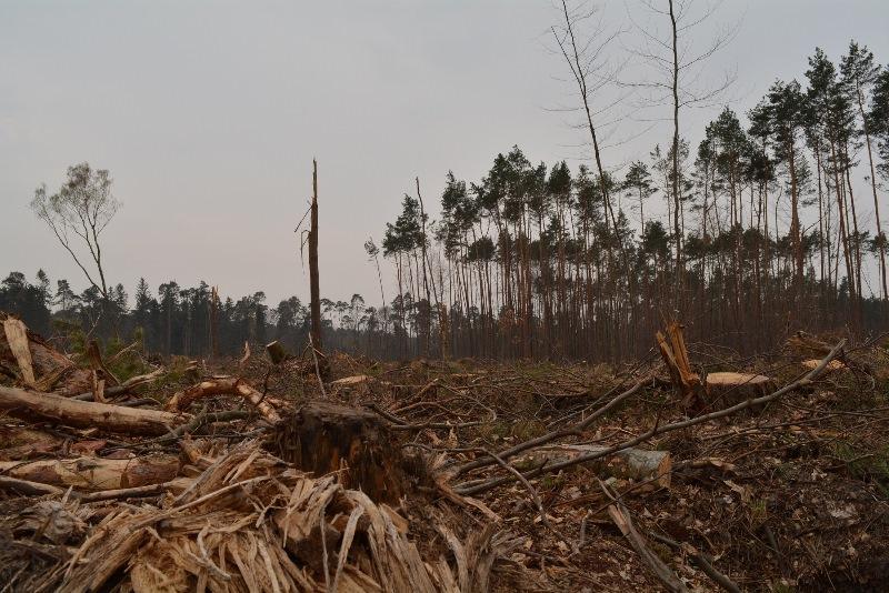 """Sturm """"Fabienne"""" hatte im September letzten Jahres gravierende Schäden im Münsterer Wald hinterlassen. Aufräum- und Wiederaufforstungsarbeiten werden sehr lange dauern und sehr kostenintensiv. Foto: GM/Meike Mittmeyer-Riehl"""
