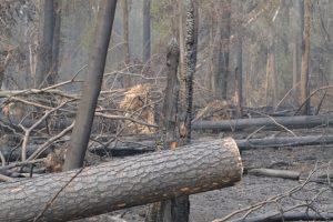 Im Wald bei Breitefeld hat es bereits gebrannt. Foto: GM/Meike Mittmeyer-Riehl