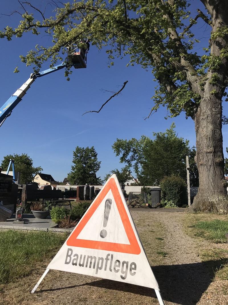 Baumpflegearbeiten auf dem Friedhof Münster