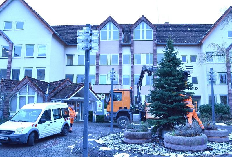 Münsters Weihnachtsbaum auf dem Rathausplatz steht jetzt. Foto: Lena Brunn