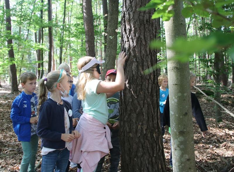 Bei einem Ausflug mit dem Förster in den Wald neben dem Freizeitzentrum gingen die Ferienspiel-Kinder auf Tuchfühlung mit Bäumen – im wahrsten Sinne des Wortes. Hier ertastet gerade die achtjährige Laura, durch eine Augenbinde blind gemacht, die Baumrinde. Foto: GM/Meike Mittmeyer-Riehl