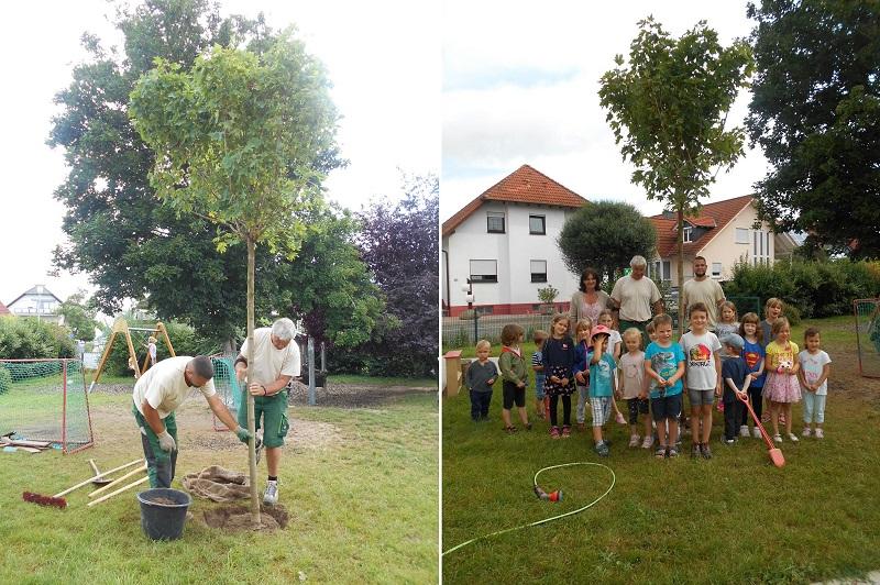 """Die Firma """"Garten und Landschaftsbau Doberstein"""" aus Groß-Umstadt hat der Kita im Rüssel einen Baum gespendet. Fotos: Kita Im Rüssel"""