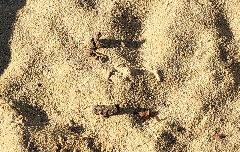 Igitt! Hundekot gehört nicht in den Sandkasten!